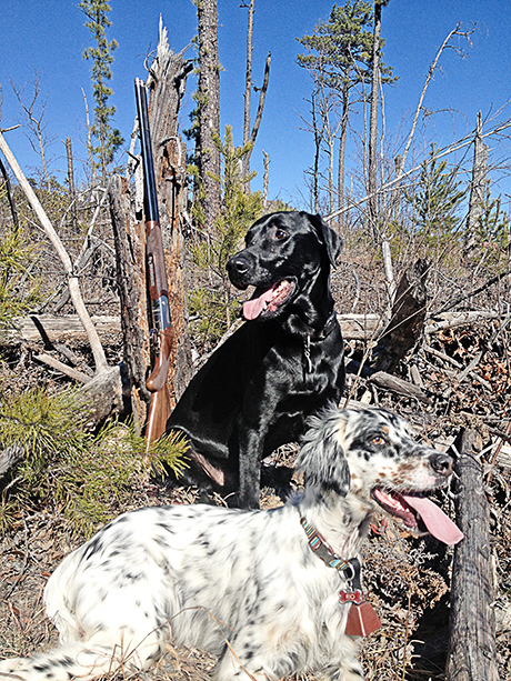 Grouse, Quail, Pheasant and Ptarmigan Hunting